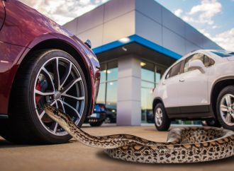 Top 10 weirdest things car buyers bring to test drives revealed